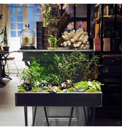 ILHO Garden - <p>L'ILHO Garden inspire le voyage au travers sa diversit&eacute; v&eacute;g&eacute;tale et son univers zen.</p> <p>V&eacute;ritable jardin mobile, leur support sont en ch&egrave;ne massif ou zinc. Les mod&egrave;les se d&eacute;clinent pour l'int&eacute;rieur et l'ext&eacute;rieur, l'entretien devient un rendez vous avec soi et le v&eacute;g&eacute;tal.</p> <p>Il est l'occasion d'&eacute;tablir une connection parfois perdue avec le v&eacute;g&eacute;tal.</p> <p><strong>Attention !!! vous risquez un l&acirc;cher-prise, un d&eacute;sir soudain de caresser les feuilles, fr&ocirc;ler les pierres, cajoler les mousses et lichens, c&acirc;liner les toutes jeunes fleurs et vous &eacute;merveiller devant les premiers bourgeons du printemps.</strong></p> <p><strong>&nbsp;</strong></p>