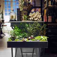 ILHO Garden - <p>L'ILHO Garden inspire le voyage au travers sa diversité végétale et son univers zen.</p> <p>Véritable jardin mobile, leur support sont en chène massif ou zinc. Les modèles se déclinent pour l'intérieur et l'extérieur, l'entretien devient un rendez vous avec soi et le végétal.</p> <p>Il est l'occasion d'établir une connection parfois perdue avec le végétal.</p> <p><strong>Attention !!! vous risquez un lâcher-prise, un désir soudain de caresser les feuilles, frôler les pierres, cajoler les mousses et lichens, câliner les toutes jeunes fleurs et vous émerveiller devant les premiers bourgeons du printemps.</strong></p> <p><strong></strong></p>