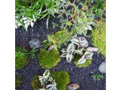 ILHO Garden - KOKENENDO