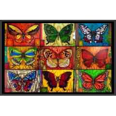 Tableux de papillons
