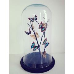 Envolée de papillons sous globe - <p>Magnifique envol&eacute;e de papillons Doxocopa sous globe (verre) sur branche naturelle</p>