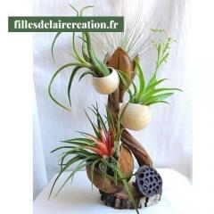 Création végétale avec 4 plantes Tillandsias - Création en matières végétales agrémentée de tillandsias
