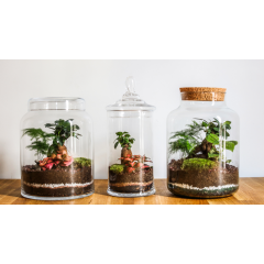 Terrarium végétal - <p>Vous n'avez pas la main verte ? Ce n'est pas grave ! Nos terrariums végétaux possèdent un écosystème quasi-autosufisant ! Pas d'entretien ni d'arrosage nécessaire !</p> <p>Nous proposons des compositions uniques, dans des bocaux en verre recyclé refermés par un bouchon en liège ou en verre qui contiennent plusieurs petites plantes tropicales.</p> <p>Toutes les compositions sont uniques, faites à la main à Paris et accessibles à tous à partir de 40€ !</p>