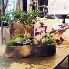 Keshiki Okina - <p>Le Keshiki est un micro paysage dans un contenant artisanal en céramique. Le keshiki Okina est le grand modèle.</p> <p>On retrouve les élèments du jardin japonais ; le minéral, parfois la mousse et le végétal, tout en harmonie.</p> <p>La céramique est la terre protectrice de ce paysage.</p>