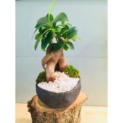 Keshiki Maiku - <p>Le Keshiki est un micro paysage dans un conteant artisanale en c&eacute;ramique. Le maiku est le petit mod&egrave;le.</p> <p>On retrouve les &eacute;l&egrave;ments du jardin japonais ; le min&eacute;ral, parfois la mousse et le v&eacute;g&eacute;tal tout en harmonie.</p> <p>La c&eacute;ramique est la terre protectrice de ce paysage.</p>