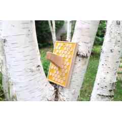 Patère nitsn X AMPA - Patère en hêtre massif français provenant de forêts françaises gérées durablement. Texturage CNC motif alvéoles. 10% reversés à l'association mécènes et parrains d'abeilles pour la protection des abeilles.