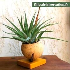 Création végétale avec Tillandsia - Création originale composée de matières végétales et d'un tillandsia