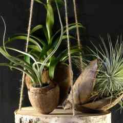 Plateau végétal à suspendre - Objet de décoration végétal, composé de bois et de matières végétales brutes, agrémenté de Tillandsias. 100% artisanal made in France