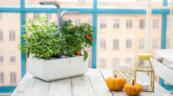 décoration, jardin, maison, Foire d'automne