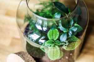 Le terrarium de la Green Touch