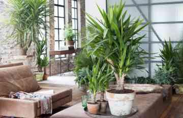 plantes conseils été