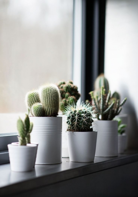 Cactus décoratif