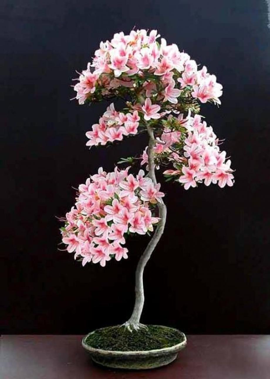 Bonsaï décoratif