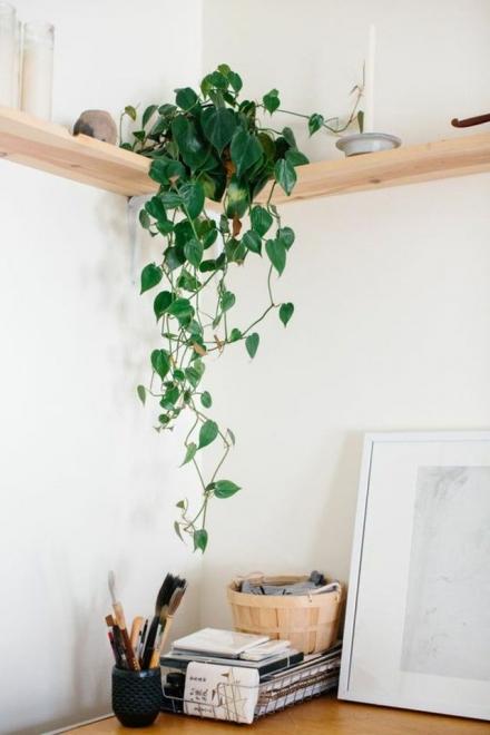 Vigne d'appartement