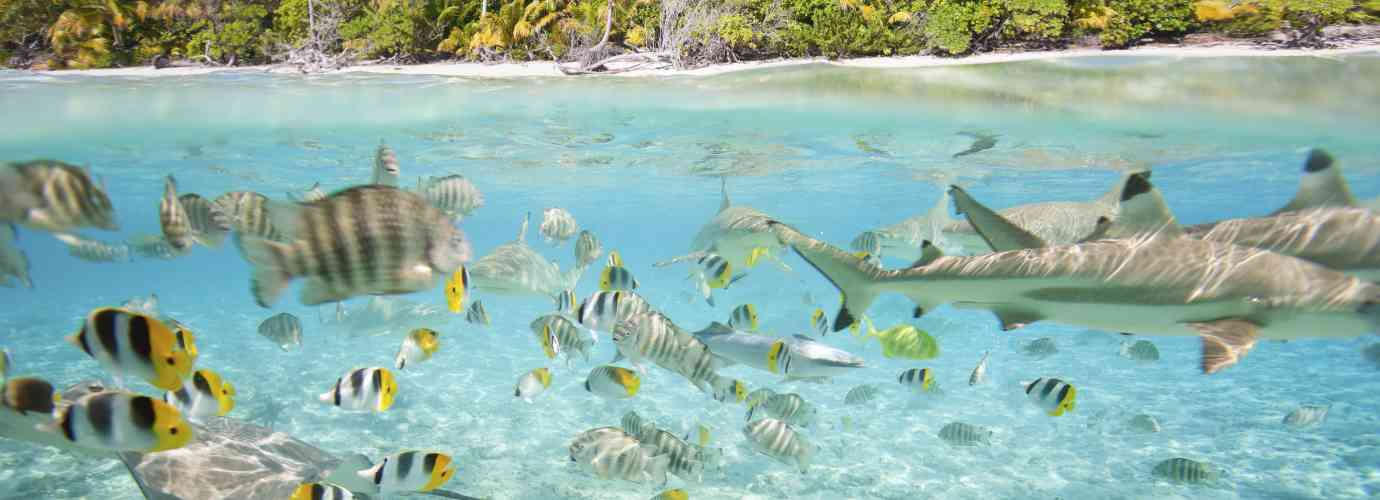décoration, foire de paris, table aquarium